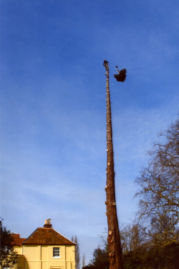 tree_felling_colchester